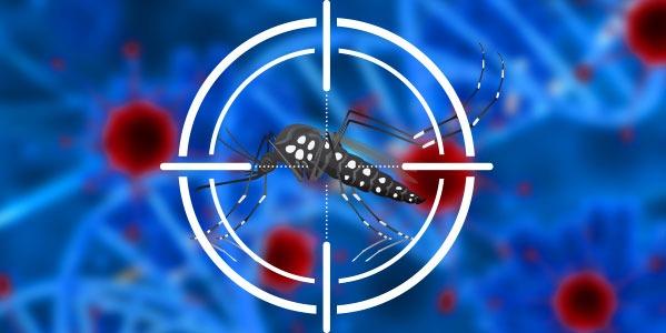 El dengue: un virus silencioso pero mortal